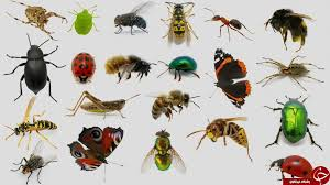 تحقیق درباره حشرات 113 صفحه
